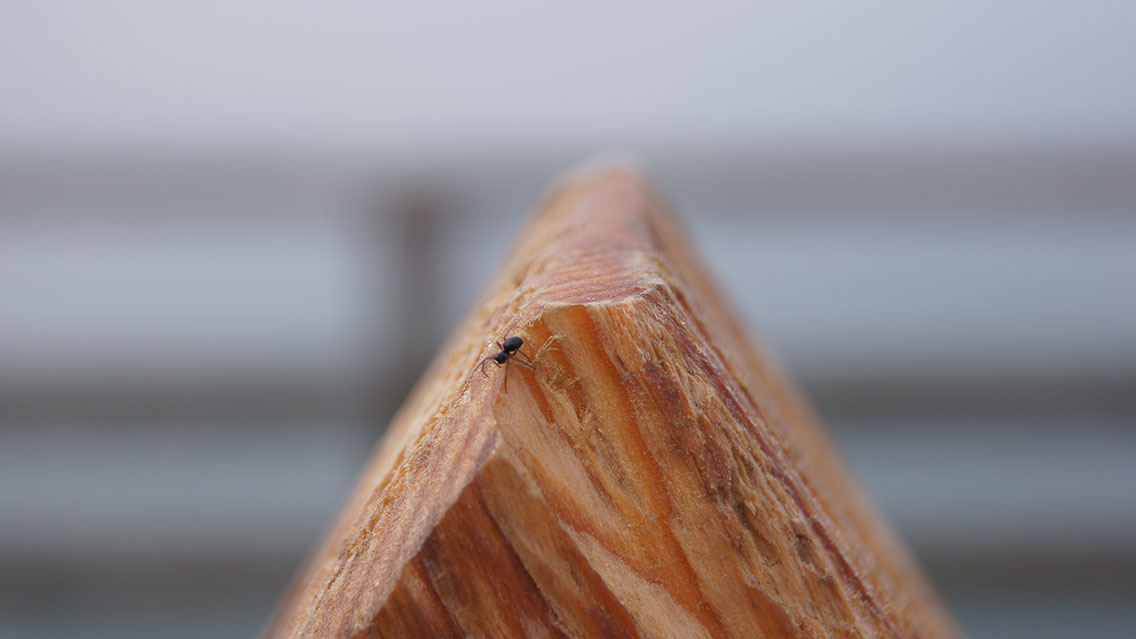 Spinne auf Holzpfahl.